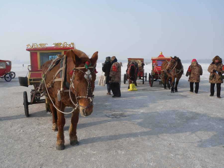 Cheery horse-drawn carriages waiting for customers. Horses look happy: how do they stay warm?