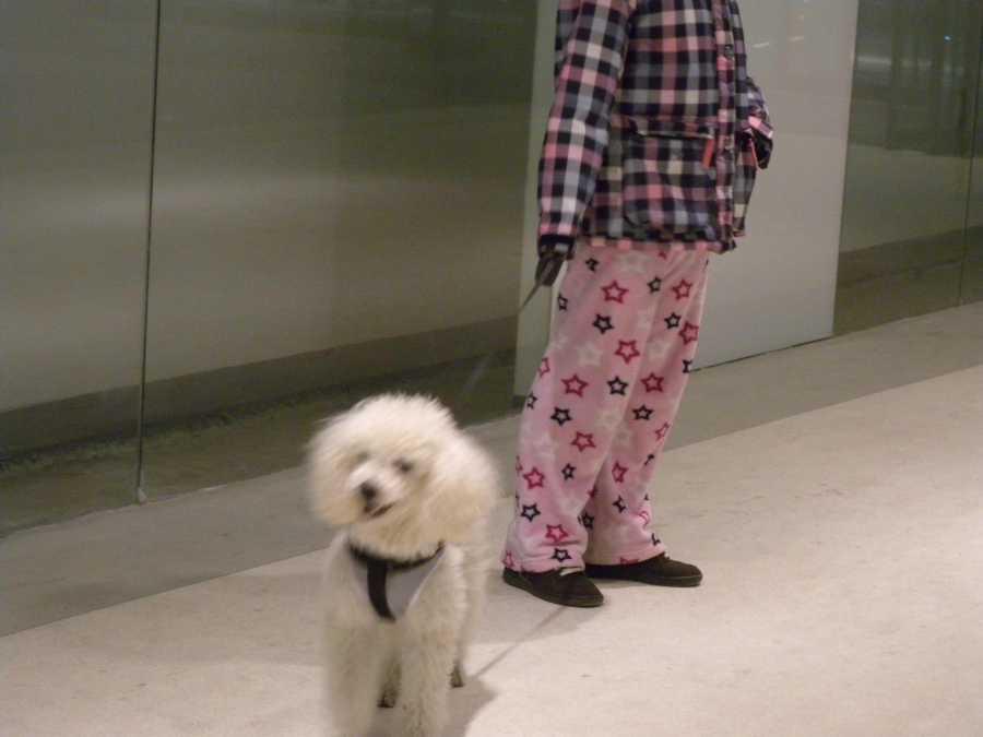 walking dog with pyjamas