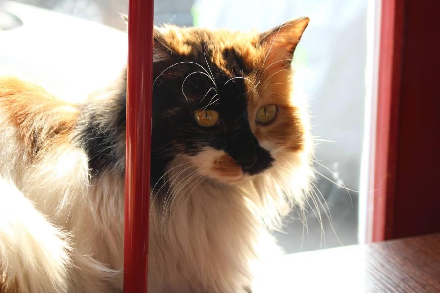 every cat enjoys a sunny spot