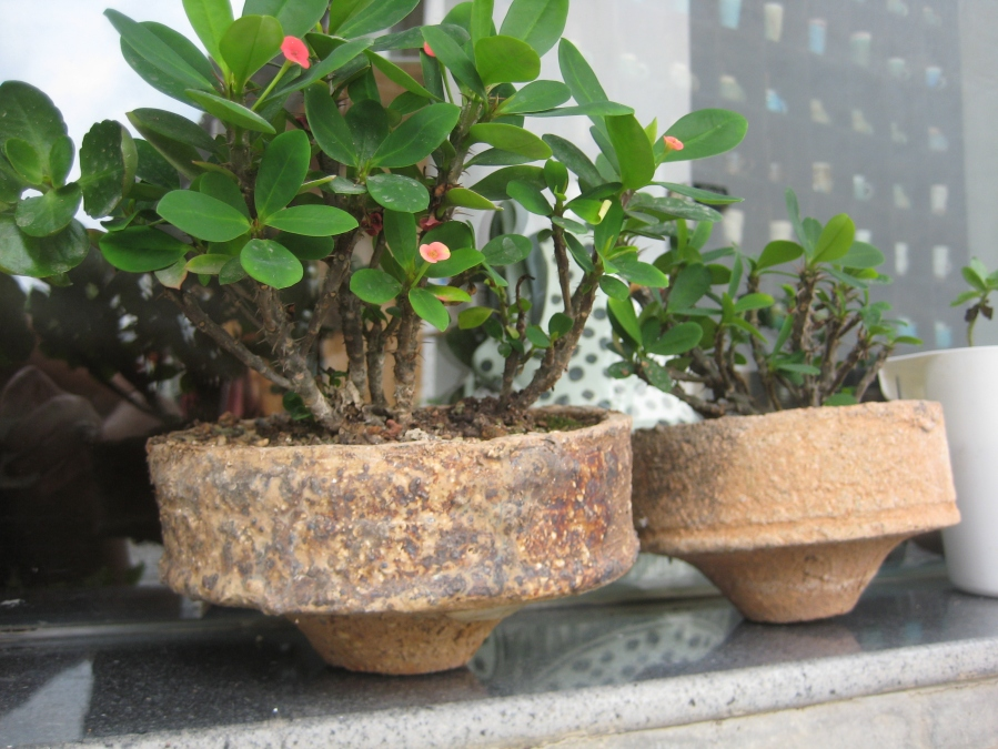 saggars as plant holders