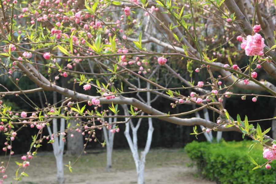 marsh mallow pink