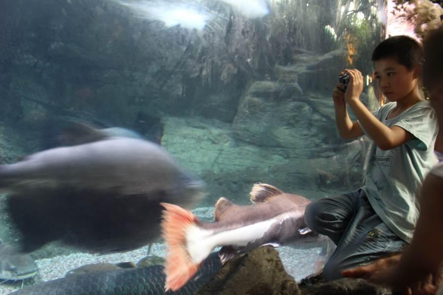 boy looks at fish